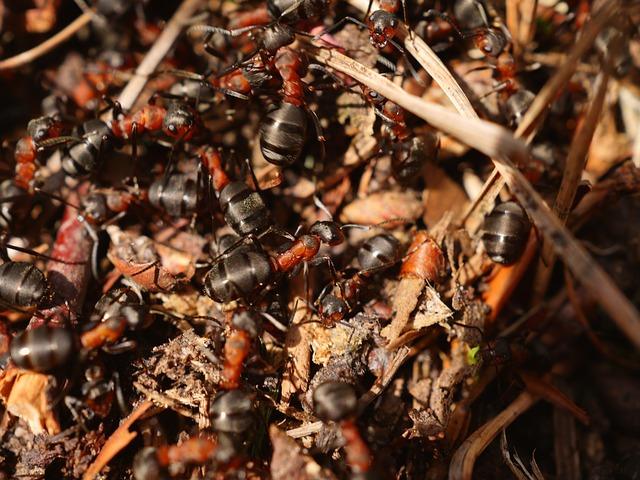 Residential pest control Ponsonby