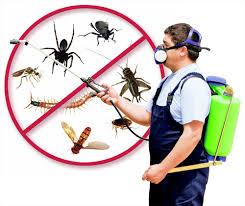 auckland pest control