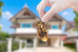 pest controller auckland